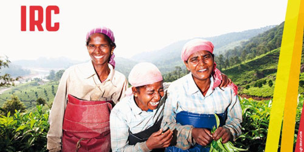 India. Foto de tres mujeres cosechando te. © Hugh Sitton/Corbis